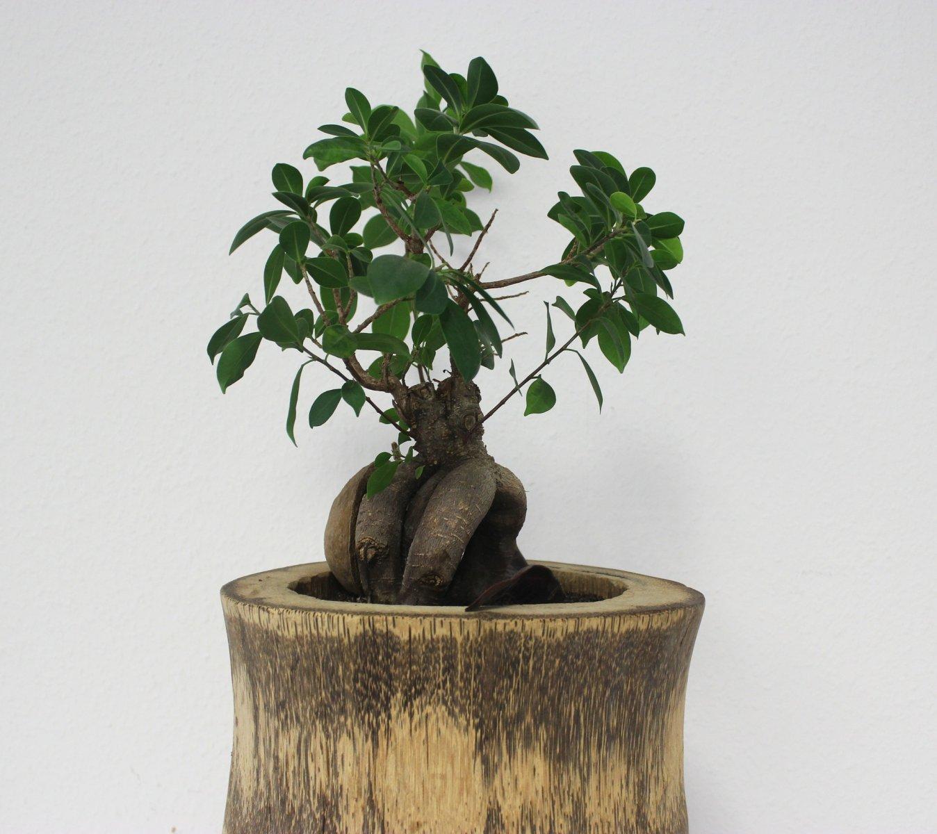 Rempotage et poterie pour plantes d 39 int rieur ou d for Fushia plante interieur ou exterieur