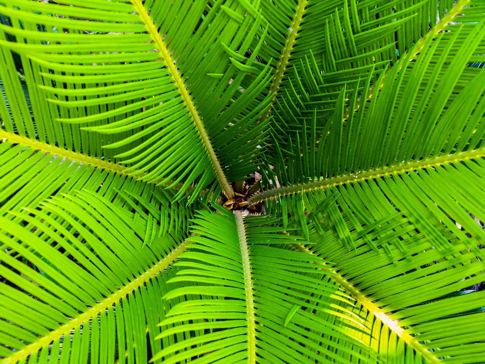 Planter un palmier pour une décoration exotique - Mobilier, décoration, architecture : Côté ...