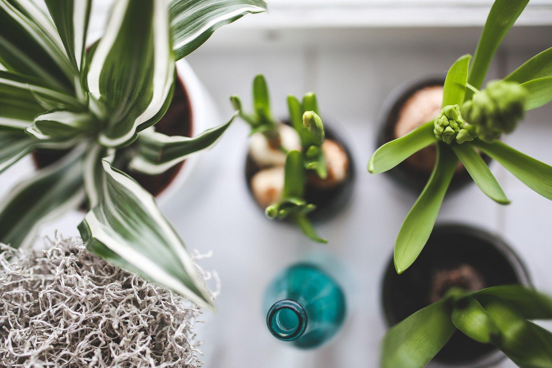 Plante D Intérieur Tendance rempotage et poterie pour plantes d'intérieur ou d'extérieur