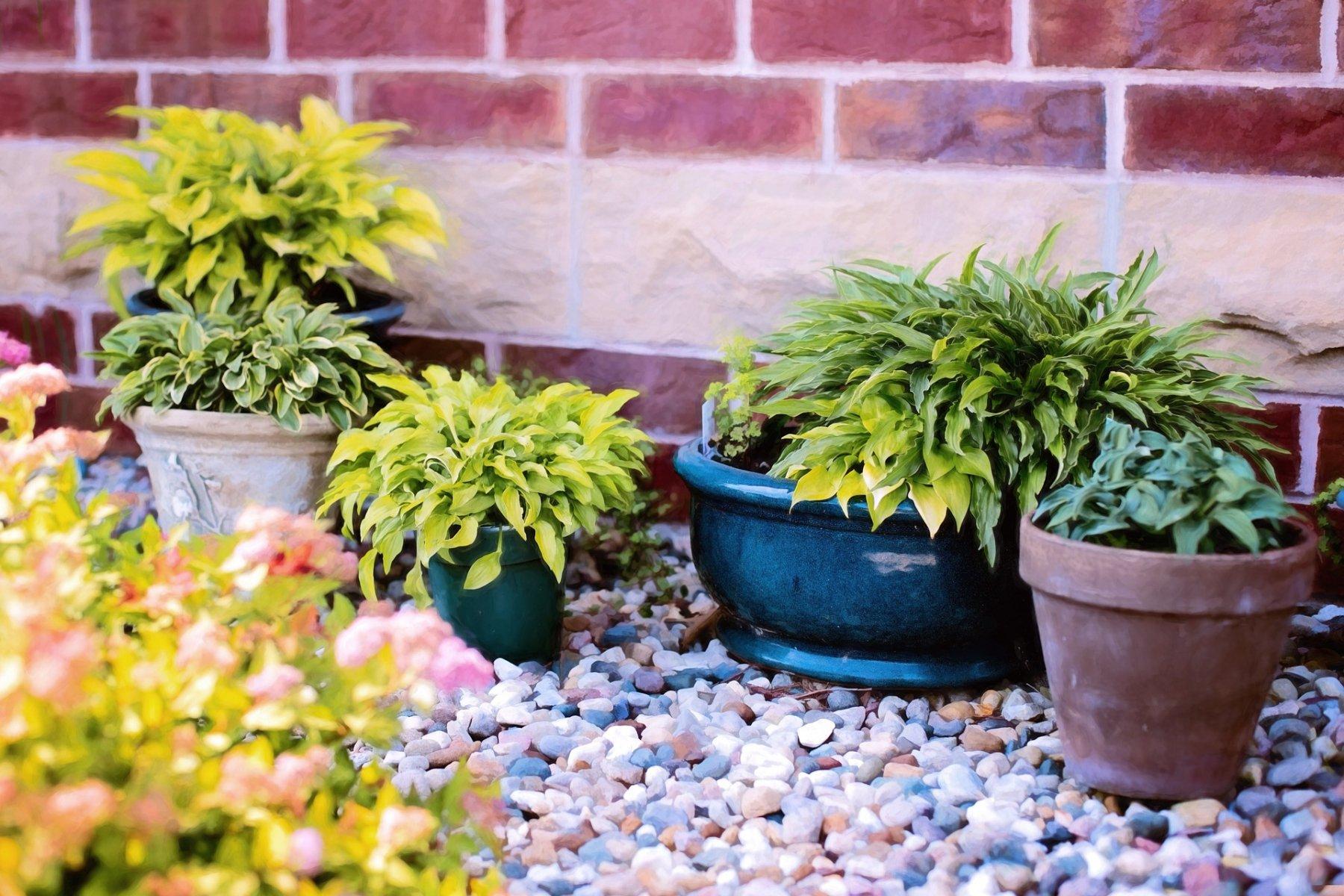 Rempotage et poterie pour plantes d 39 int rieur ou d for Plantes d exterieur