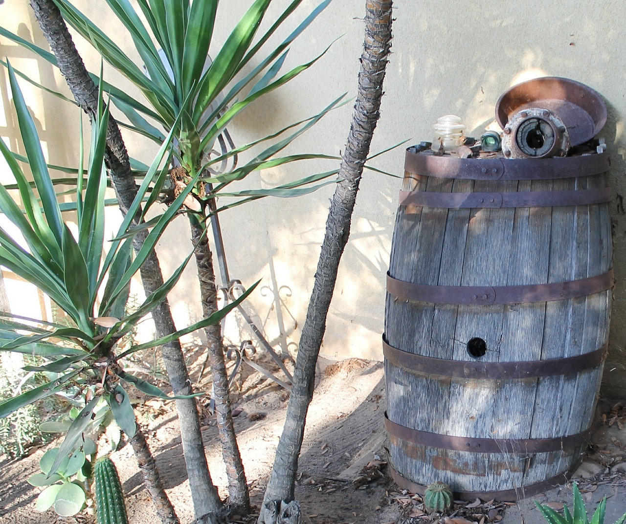 Planter un yucca dans votre jardin pour sa vivacit - Ou planter un palmier dans son jardin ...